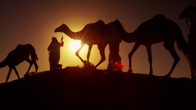 middle eastern male camel owners in desert arabia - saudi arabia stock videos & royalty-free footage