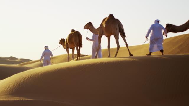 middle eastern male camel owners in desert arabia - middle eastern ethnicity bildbanksvideor och videomaterial från bakom kulisserna