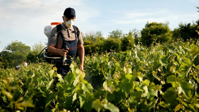 a middle-aged farmer spraying pesticide in vineyard - spraying stock videos and b-roll footage