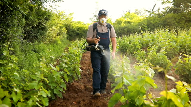 a middle-aged farmer spraying pesticide in vineyard - insecticide stock videos & royalty-free footage