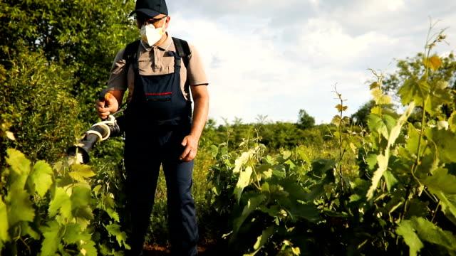 a middle-aged farmer spraying pesticide in vineyard - viticoltura video stock e b–roll