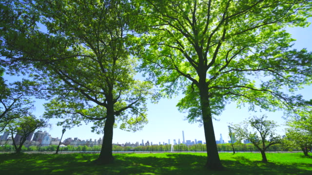 midtown manhattan skyscraper stands through the two big growing fresh green leaf trees beyond the central park reservoir in central park at new york city ny usa on may. 11 2019. - midtown manhattan stock videos & royalty-free footage