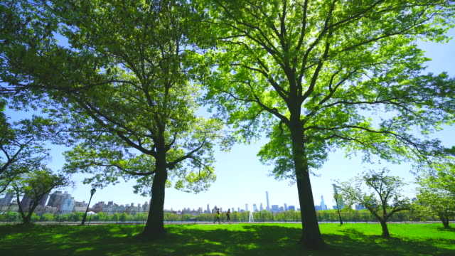midtown manhattan skyscraper stands through the two big growing fresh green leaf trees beyond the central park reservoir in central park at new york city ny usa on may. 11 2019. - lush stock videos & royalty-free footage