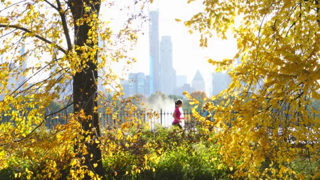 midtown manhattan skyscrapers can be seen among the shaking autumn color trees, behind the reservoir at late afternoon in central park new york ny usa on nov. 07 2018. - central park manhattan video stock e b–roll