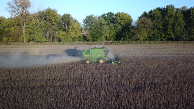 midwest autumn harvest scene - soybean stock videos and b-roll footage