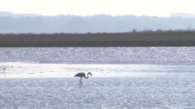 Mientras los humedales van perdiendo terreno por la urbanizacion Uruguay busca proteger una vasta extension que acoge a unas 200 especies de aves y...