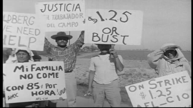 migrant workers walk off the field and strike, trying to raise their pay to 1.25 per hour / california migrant farm workers struggled to better their... - trade union stock videos & royalty-free footage
