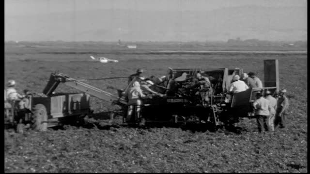 migrant workers working on tomato harvesting machine as it rolls along the field. - lavoratore emigrante video stock e b–roll