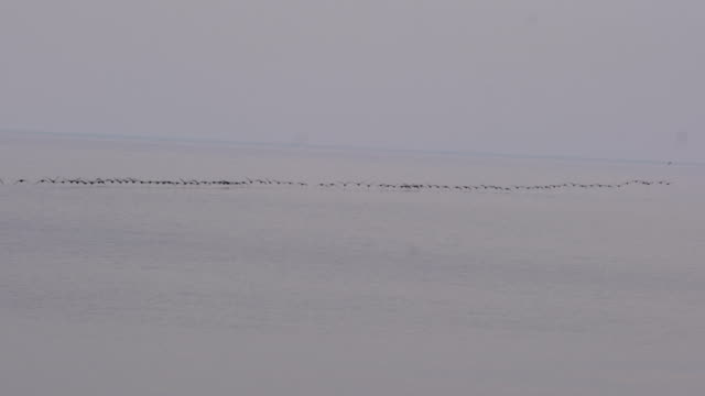 stockvideo's en b-roll-footage met migrerende canadese ganzen - vogeljacht