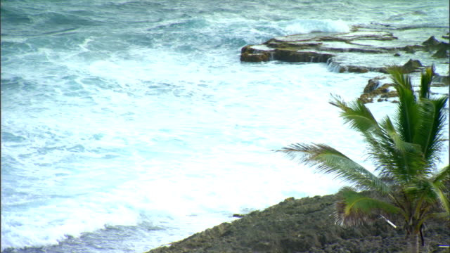 Mildly strong waves white washing up against rocks along frame partial tropical bush frame on top of rock
