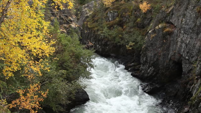 6 mile creek, chugach national forest, alaska. - chugach national forest stock videos & royalty-free footage