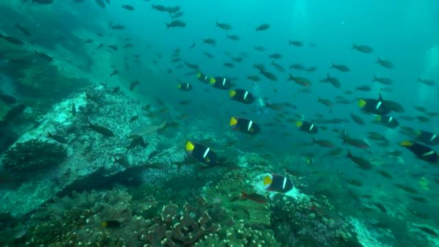 vidéos et rushes de milieu aquatique en colombie - colombie
