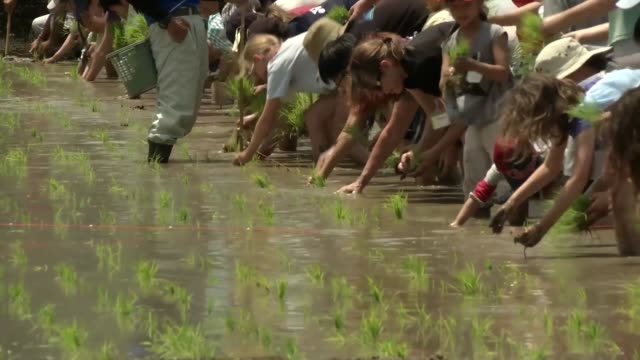 us military personnel based at iwakuni take part in community rice planting in a rice paddy - 米軍点の映像素材/bロール