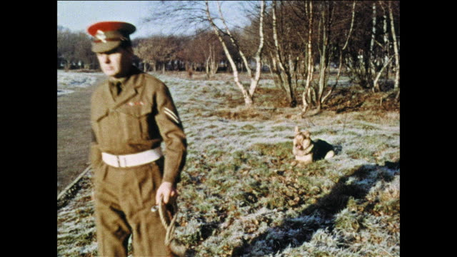 montage military policeman trains a dog / uk - mp stock videos & royalty-free footage