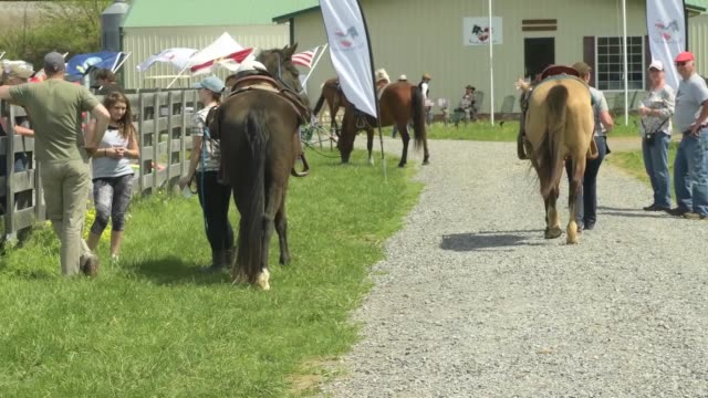 vídeos y material grabado en eventos de stock de military veterans find solace with horses - burro