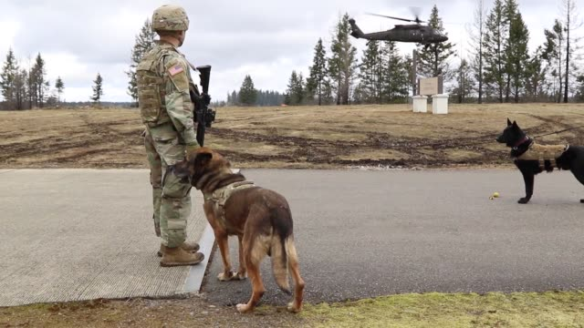 military working dogs and their handlers conduct aviation operations training, including boarding, travelling on and disembarking uh-60 black hawk... - military training stock videos & royalty-free footage