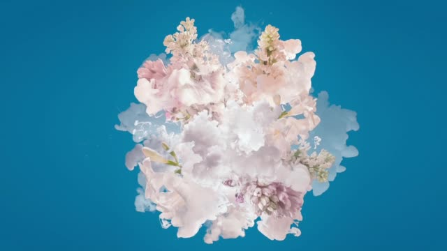 milk and flowers exploding - creativity stock videos & royalty-free footage