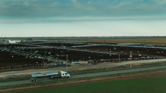 milk tanker driving past dairy feedlot at dusk - aerial shot - meadow stock videos & royalty-free footage