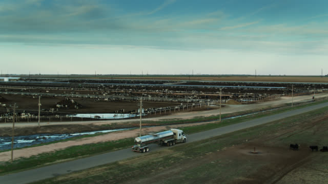 milk tanker passing dairy feedlot - drone shot - new mexico stock videos & royalty-free footage
