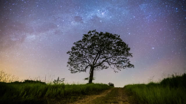 milk way and the tree - single tree stock videos & royalty-free footage