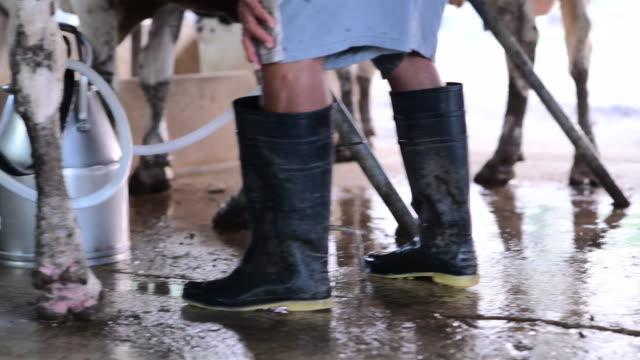 vídeos y material grabado en eventos de stock de una máquina de ordeño sube leche en una granja lechera. - menos de diez segundos