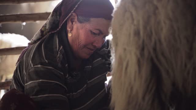 milking - turkish ethnicity stock videos & royalty-free footage