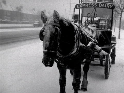 a milkman's horse is covered in snow during a blizzard - milkman stock videos & royalty-free footage