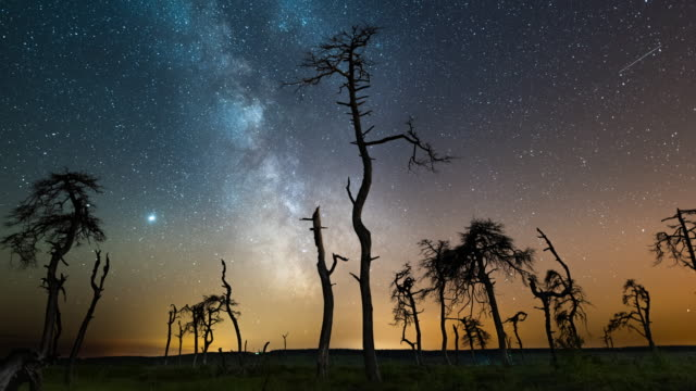 milky way a swamp with dead trees - swamp stock videos & royalty-free footage