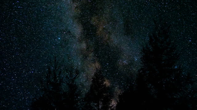milky way above pine tree at night - star field stock videos & royalty-free footage