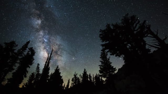 stockvideo's en b-roll-footage met time lapse: milky way and bristlecone grove - naaldbos