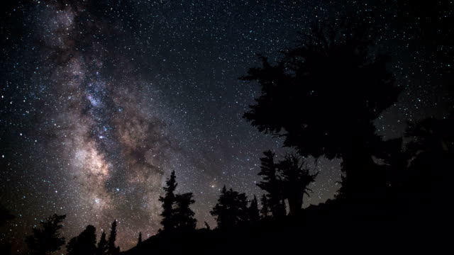 time lapse: milky way and bristlecone - astronomy stock videos & royalty-free footage