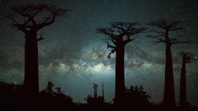 milky way at avenue of the baobabs - safari animals stock videos & royalty-free footage