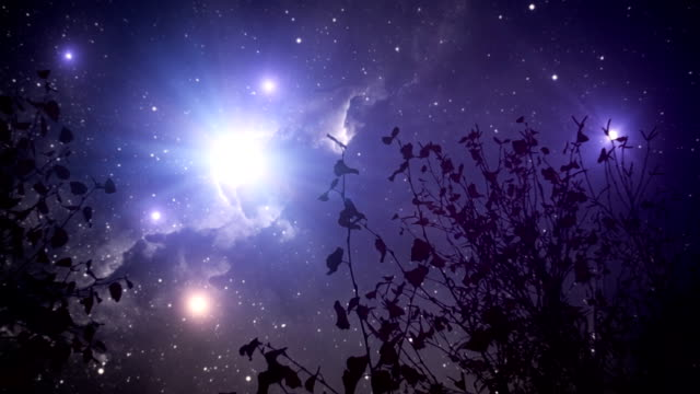 milky way galaxy and trees in wind - fantasy stock videos & royalty-free footage