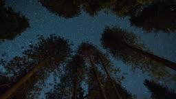 Milky Way Night Sky - Above the Treetops