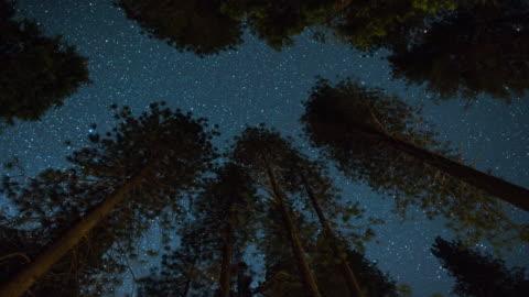 vídeos y material grabado en eventos de stock de el cielo nocturno de la vía láctea-sobre las copas de los árboles - night