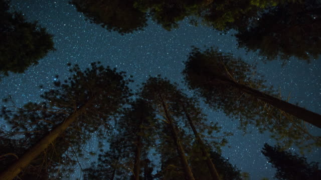 milky way night sky - above the treetops - 4k resolution stock videos & royalty-free footage