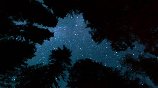 milky way night sky - above the treetops - sequoia stock videos & royalty-free footage