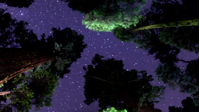 milky way night sky - above the treetops - giant sequoia stock videos and b-roll footage
