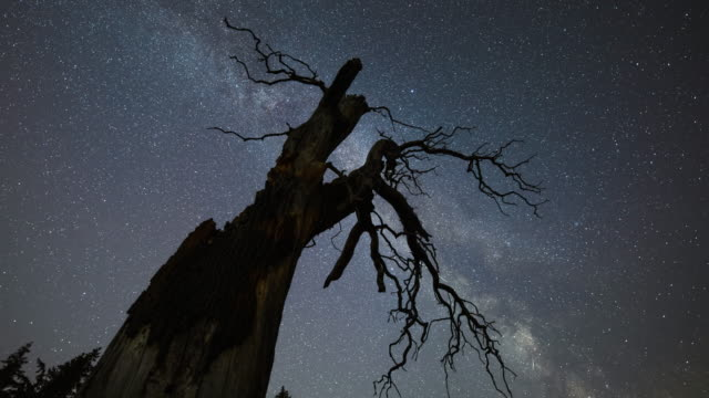 milky way over dead tree - ethereal stock videos & royalty-free footage