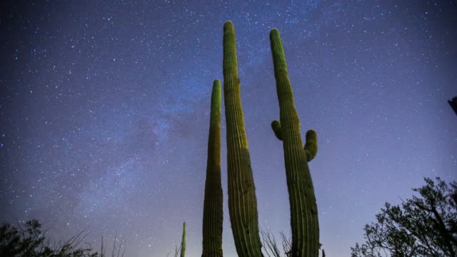vídeos de stock e filmes b-roll de milky way over desert cactus time lapse - cato