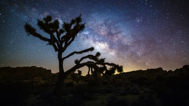 milky way over joshua tree - tracking shot - joshua tree national park stock videos & royalty-free footage