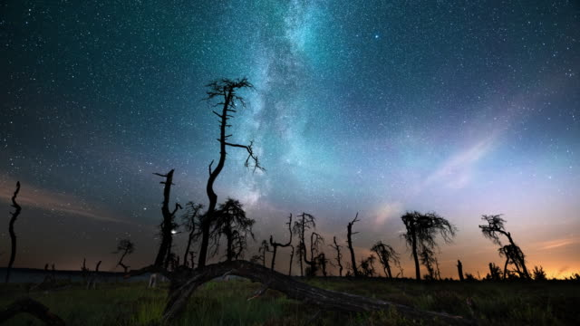 milky way over the dead trees of noir flohay - swamp stock videos & royalty-free footage