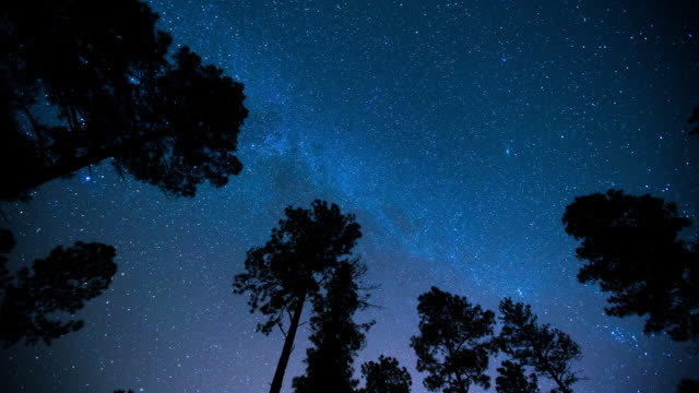 milky way over trees timelapse. - star trail stock videos & royalty-free footage