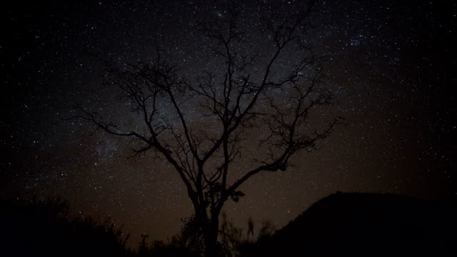 milky way time lapse - sequoia stock videos and b-roll footage