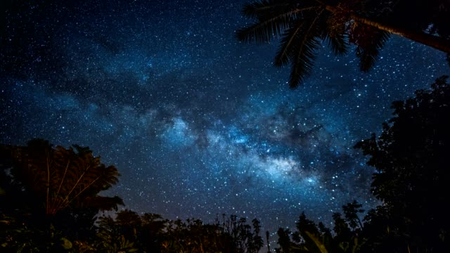 vidéos et rushes de milky way tropical time-lapse - palmier