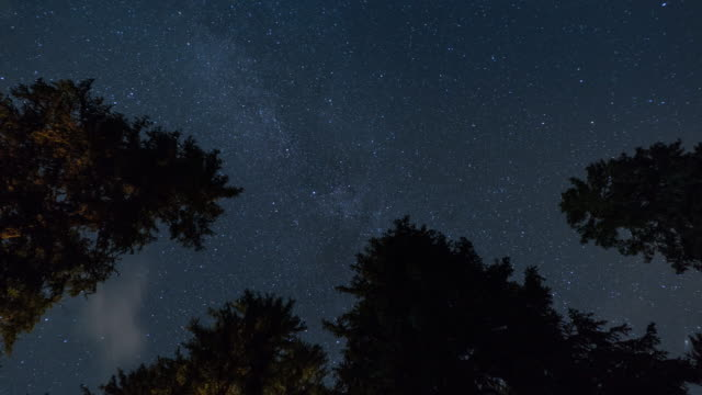 Milky way with Pine trees, Spiral zoom, Night sky stars