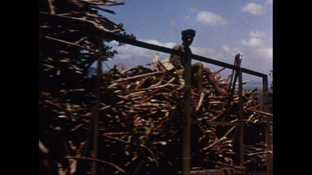 montage mill factory processing sugar cane in mauritius - 牛車点の映像素材/bロール