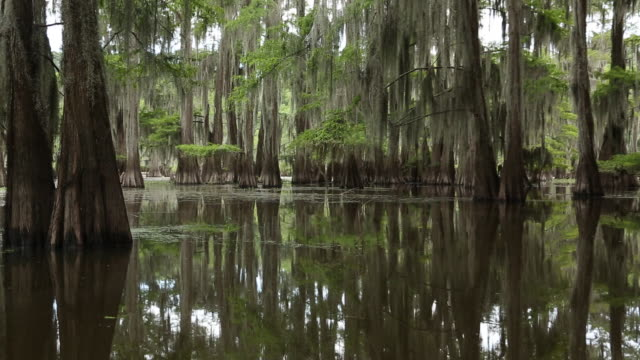 Mill Pond at Caddo Lake State Park