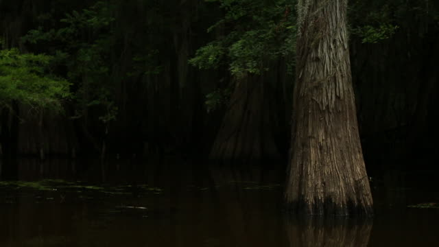 mill pond at caddo lake state park - pond life stock videos and b-roll footage