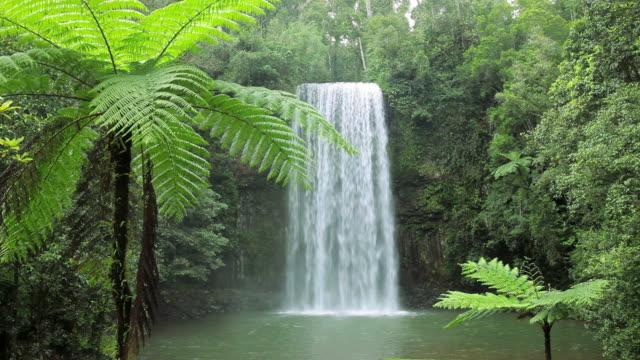 millaa millaa falls, atherton tablelands nr cairns, queensland, australia, southern hemisphere - southern hemisphere stock videos & royalty-free footage
